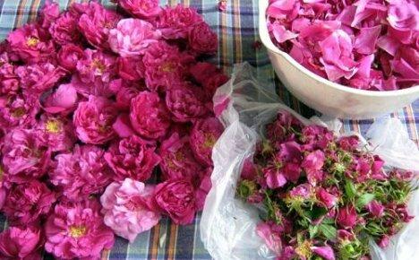 Подскажите как применять лепестки роз в домашних условиях