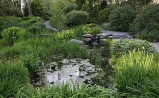 Как преобразить болотистый участок в цветущий оазис