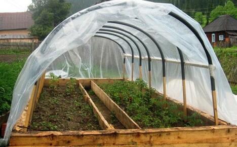 Как выбрать пленку для теплицы, чтобы вырастить хороший урожай