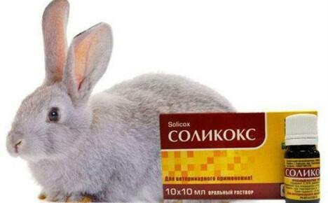Как применять «Соликокс» для кроликов