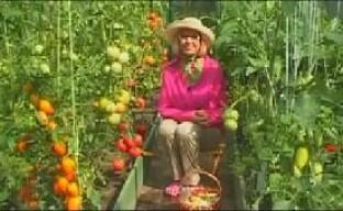 Выращивание рассады болгарского перца на даче — видео