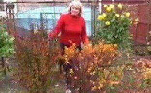 Удивительный барбарис на дачном участке (видео)