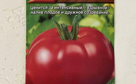 Неприхотливый сорт помидор Взрыв дает до 4 кг плодов при выращивании в любом климате