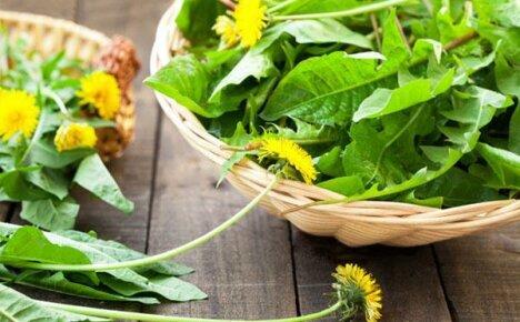 Дар природы — лечебные листья одуванчика