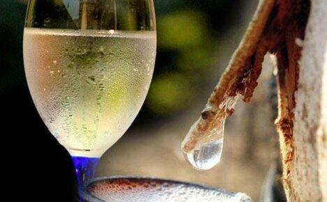 Простые домашние рецепты вина из березового сока