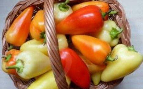 Выращивание болгарского перца: секреты успеха