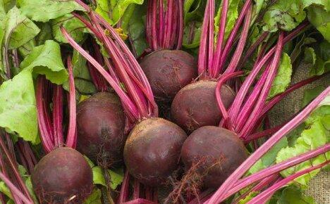 Посев, удобрение и сбор урожая свеклы
