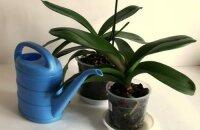 Какой водой поливать орхидеи или что любят красавицы-эпифиты