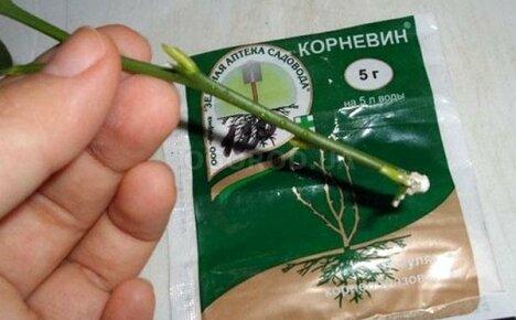 Инструкция по применению Корневина биостимулятора растений