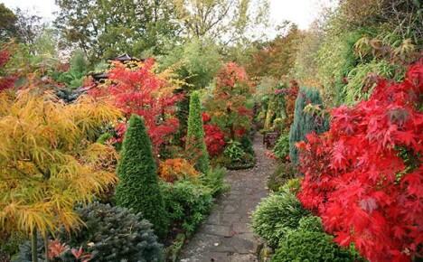 Выбираем яркие красивые растения для осеннего сада