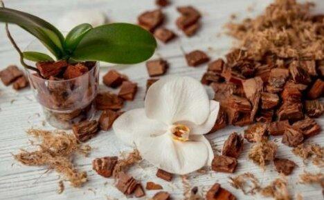 Какой грунт нужен для орхидеи: особенности субстрата в зависимости от вида цветов