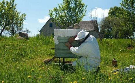 Как правильно сделать отводок пчел