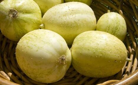 Выращиваем у себя на грядках огурец-лимон (хрустальное яблоко)