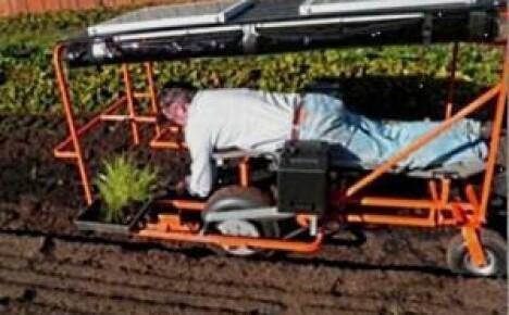 Работаем отдыхая на дачных грядках с ложе-машиной