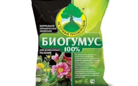 Использование гумуса для удобрения комнатных цветов