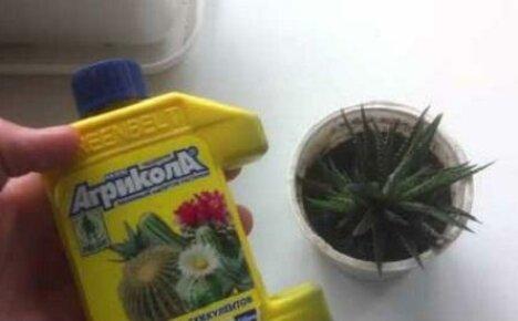 Удобряем комнатные цветы Агриколой