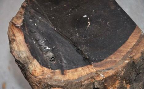 Самая ценная в мире древесина — эбеновое дерево