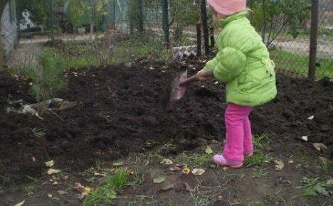 Как правильно ухаживать за огородом осенью, чтобы получить хороший урожай?