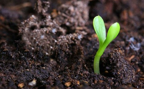 Что такое гумус и как контролировать его содержание на огороде?