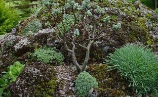 Удивительно красивая альпийская горка с карликовыми ивами