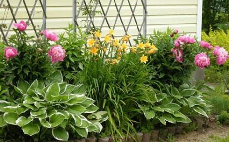Что посадить на клумбе около дома?