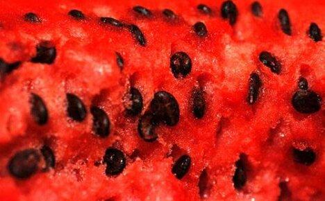 Польза и вред арбузных семечек для нашего здоровья