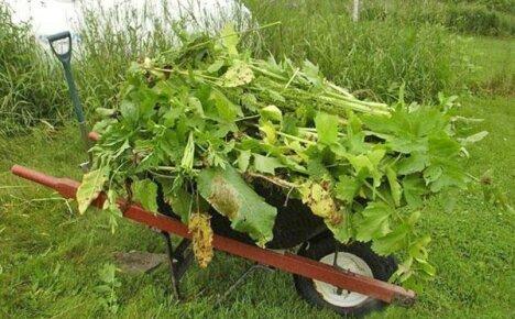 Распространенные сорняки на огороде и человек — извечная дуэль всех поколений