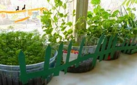 Как организовать огород на подоконнике своими руками?