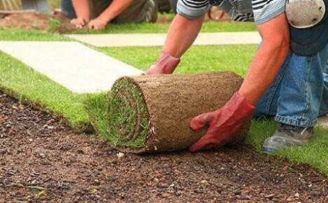Что скажите про живой газон в рулонах?