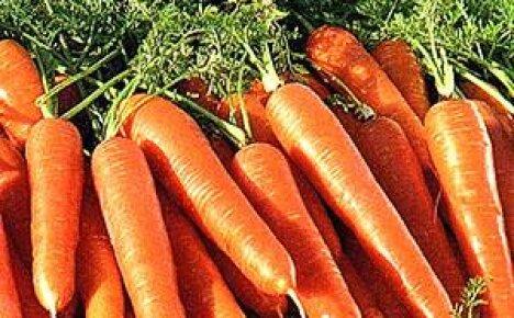Как сеять морковь без прореживания?