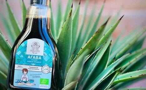 Лечебные свойства растения агавы: состав растения, эффективные рецепты