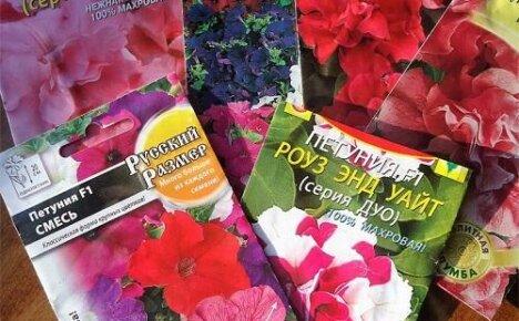 Какие семена петунии лучше покупать для выращивания рассады?