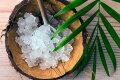 Живое лекарство — морской рисовый гриб, лечебные свойства, отзывы