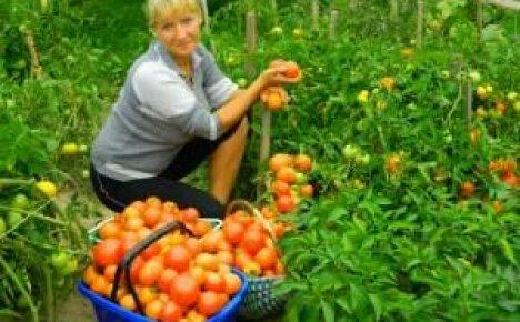 Навоз как органическое удобрение на даче