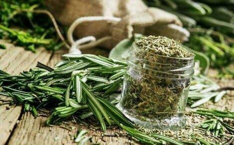 Применение эстрагона в кулинарии и народной медицине
