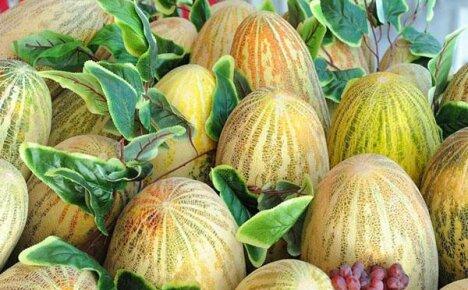 Ананасная дыня или Ич-Кзыл удивит вас тонким ароматом и сочной мякотью