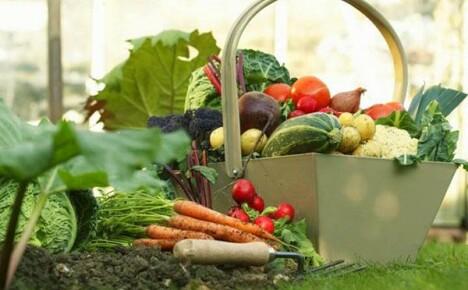 Планирование огорода для начинающих — опыт зарубежных фермеров