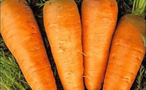 Посадка моркови на Урале
