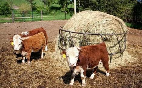 Разведение карликовых животных на ферме