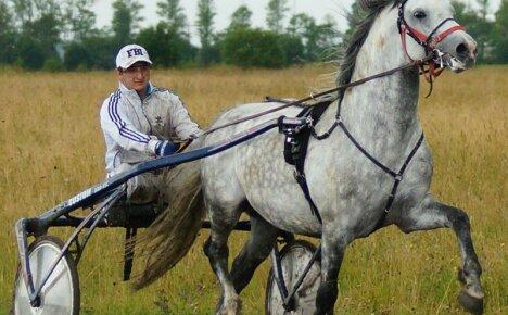 Как правильно запрягать лошадь для верховой езды или перевозки груза
