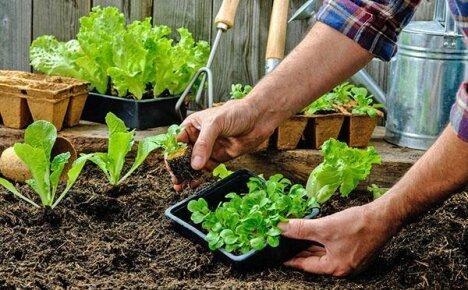Календарь дачника: сезонные работы на огороде в мае