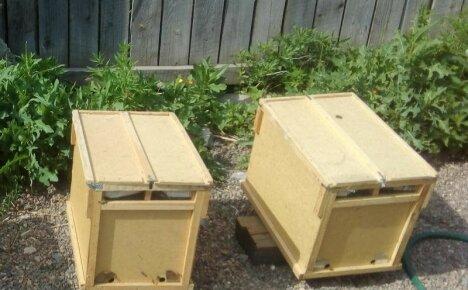 Разбираемся, что такое пчелопакеты и как с ними работать