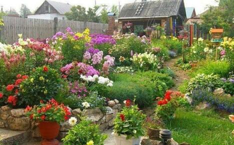 Пышное прощание с летом — осенние многолетние цветы