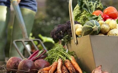 Выращивайте на своих грядках самые полезные и питательные овощи