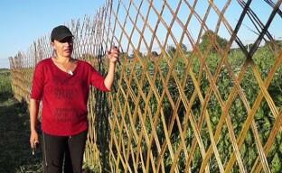 Плетение живой изгороди из ивы