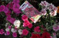 Как вырастить многолетнюю гвоздику: способы посева семян