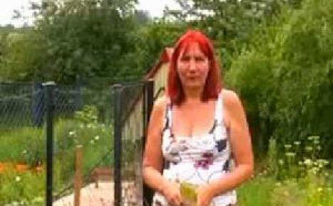 Видео: когда лучше всего сеять редис?