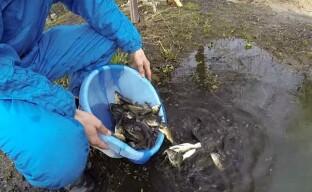 Правильный запуск рыбы в пруд