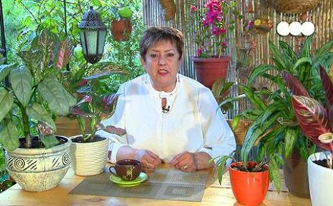 Выращивайте аглаонему дома