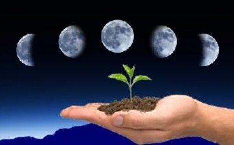 Как Луна влияет на землю с точки зрения огородничества